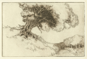 Ancient Hawthorne by Margaret Adams Parker, Etching, 2010