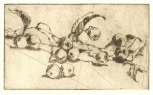 """""""Eucalyptus Pods - From Carole's Garden"""" by Margaret Adams Parker, Etching, 2010"""