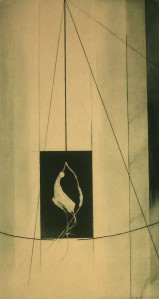 Zantedeschia by Jenny Freestone Etching and Aquatint | 2012